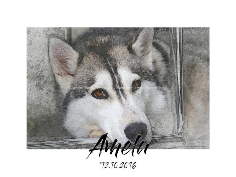 Amela1